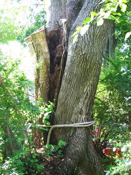 hazard tree 1