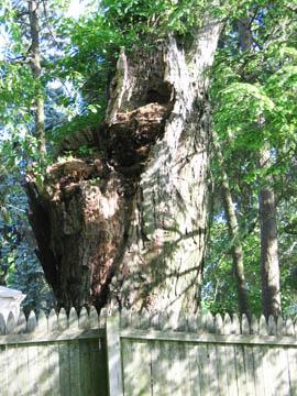 hazard tree 4