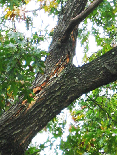 hazard tree 5a