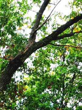 hazard tree 5