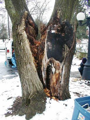 hazard tree 6