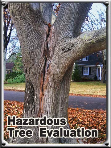 Hazardous Tree Evaluation
