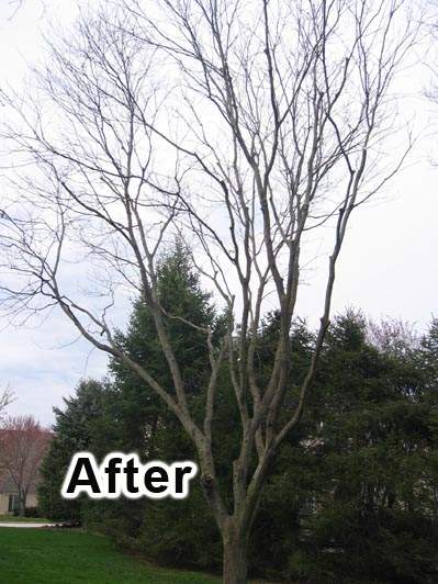 tree pruning 5a