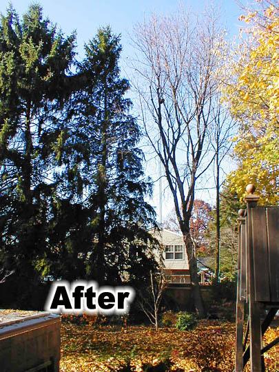 tree pruning 7b